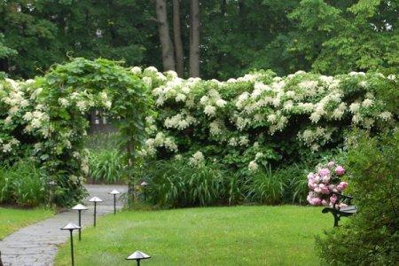 Живая изгородь - лучшее украшение для загородного участка