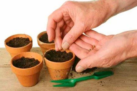 Готовим семена к посадке