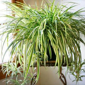 Как правильно подобрать растение для дома