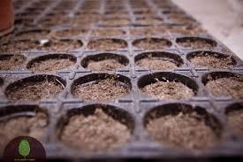 Выбираем качественную тару для выращивания рассады самостоятельно