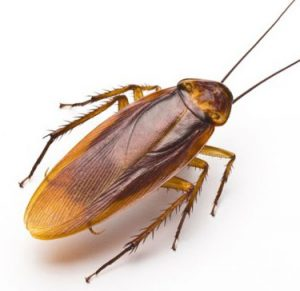 Услуги обработки от тараканов
